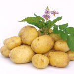 Kartoffelbalsam Pflegeserie
