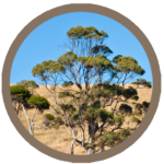 Teebaum Produkte